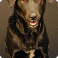 Adopt A Pet :: Princess - Newland, NC