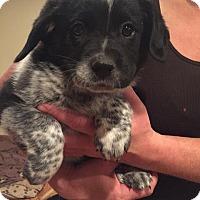 Adopt A Pet :: Hendrix - Sugar Grove, IL