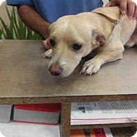Adopt A Pet :: *BUCKY - Ocala, FL