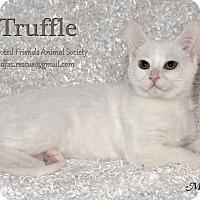 Adopt A Pet :: Truffle - Ortonville, MI