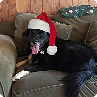 Chow Chow/American Eskimo Dog Mix Dog for adoption in McDonough, Georgia - Josie