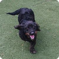 Adopt A Pet :: Jack - Winder, GA