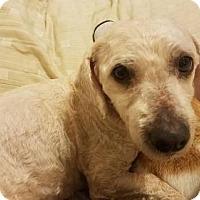 Adopt A Pet :: Maddy - Modesto, CA