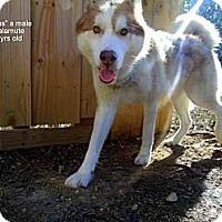 Adopt A Pet :: Sylus - Gadsden, AL
