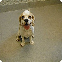 Adopt A Pet :: Sherlock - Ottawa, ON