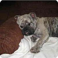Adopt A Pet :: Vanity - Gilbert, AZ