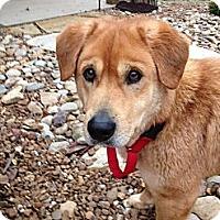 Adopt A Pet :: Luke - Brattleboro, VT