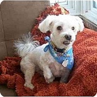 Adopt A Pet :: Roscoe - Rigaud, QC