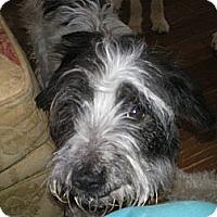 Adopt A Pet :: Jessi - Apex, NC