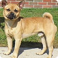 Adopt A Pet :: Kyler - Washington Court House, OH