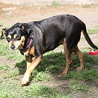 Adopt A Pet :: Prissy - Charlotte, NC