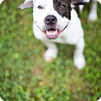 Adopt A Pet :: Cookie - Reisterstown, MD