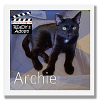Adopt A Pet :: Archie - Palm Desert, CA