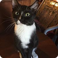 Adopt A Pet :: Patsy - Morganton, NC