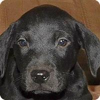 Adopt A Pet :: Abner - MINNEAPOLIS, KS