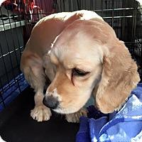 Adopt A Pet :: Jean - Oak Ridge, NJ