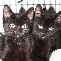 Adopt A Pet :: Babka and Stollen - North Branford, CT