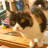 Adopt A Pet :: Gizelle - Lombard, IL