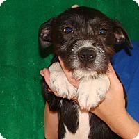 Adopt A Pet :: Felafel - Oviedo, FL