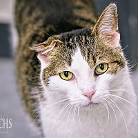 Adopt A Pet :: Farley - Martinsville, IN