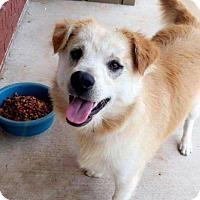 Adopt A Pet :: Toby meet me 6/17 - Manchester, CT
