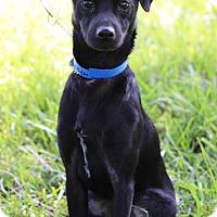 Adopt A Pet :: Buck - Waldorf, MD