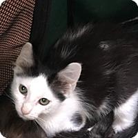 Adopt A Pet :: Domino - Houston, TX