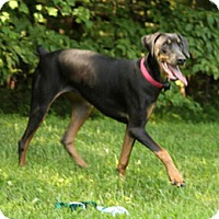 Adopt A Pet :: BLEAU - Greensboro, NC