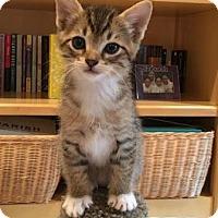 Adopt A Pet :: Zeus - Richardson, TX