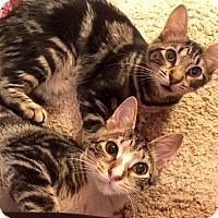 Adopt A Pet :: Bonnie & Clyde - Jacksonville, FL