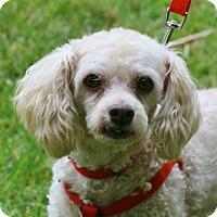 Adopt A Pet :: Alvin - Carlsbad, CA