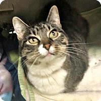 Adopt A Pet :: Pearl - Flint, MI