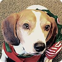 Adopt A Pet :: Sawyer - Houston, TX