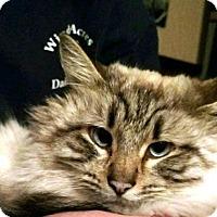 Adopt A Pet :: Toby - Pinckney, MI