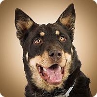 Adopt A Pet :: Poncho - Prescott, AZ