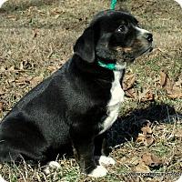 Adopt A Pet :: SADIE/ADOPTED - PRINCETON, KY
