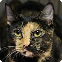 Adopt A Pet :: Gin - Medford, MA