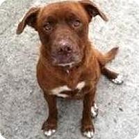 Adopt A Pet :: Annabell (Adoption fee $200) - Staunton, VA