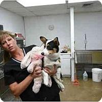 Adopt A Pet :: Anna Bell - Inola, OK