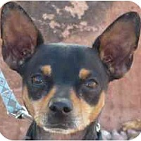 Adopt A Pet :: Cody - Las Vegas, NV