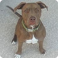 Adopt A Pet :: Charley - Phoenix, AZ