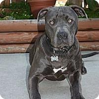 Adopt A Pet :: Zeus - San Diego, CA