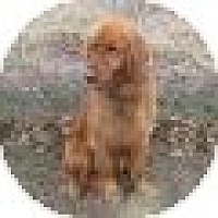 Adopt A Pet :: Gunner - Denver, CO