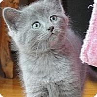Adopt A Pet :: Azure & Starbrose - Chicago, IL