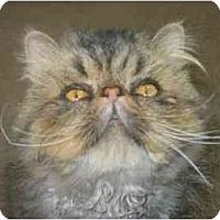 Adopt A Pet :: Fizgig - Davis, CA