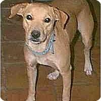 Adopt A Pet :: Taylor - dewey, AZ