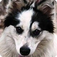 Adopt A Pet :: Fiona - Kingwood, TX