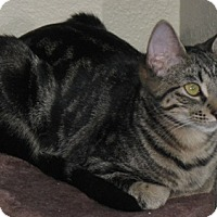 Adopt A Pet :: Melina - North Highlands, CA