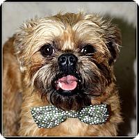 Adopt A Pet :: SPARKY - ADOPTION PENDING - Seymour, MO