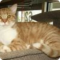 Adopt A Pet :: Connor - Powell, OH